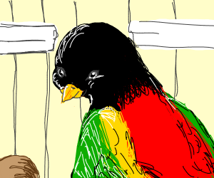 parrot with black head