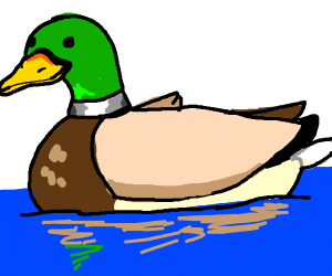 duck, just a duck