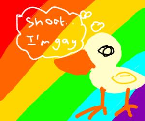gay duck
