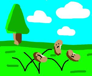 bouncing beans