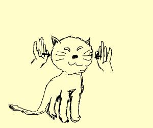 clapp the kitten cheeks