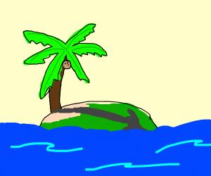 palm tree casting shadow over island