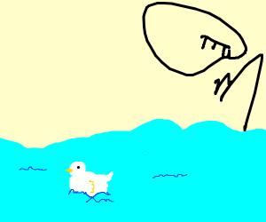 A swan swimming on lake