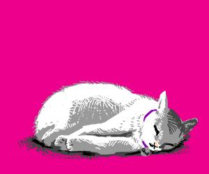 A fat cat named Ghost