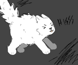Angry floofy cat