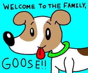 dog welcoming someone