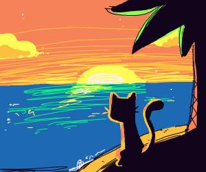 Cat on an island