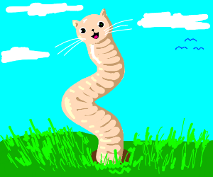 Kitty earthworm