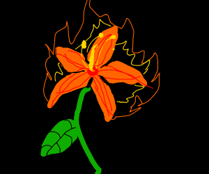 Lily of Fire