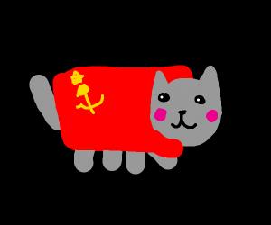 Russian neon cat