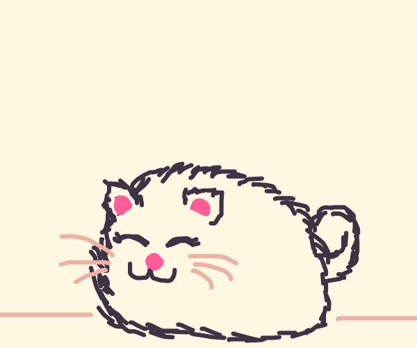 A really fluffy cat