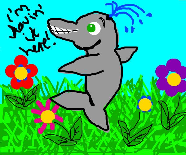 Porpoise enjoys the meadow