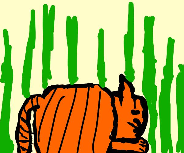 Orange cat at the grass