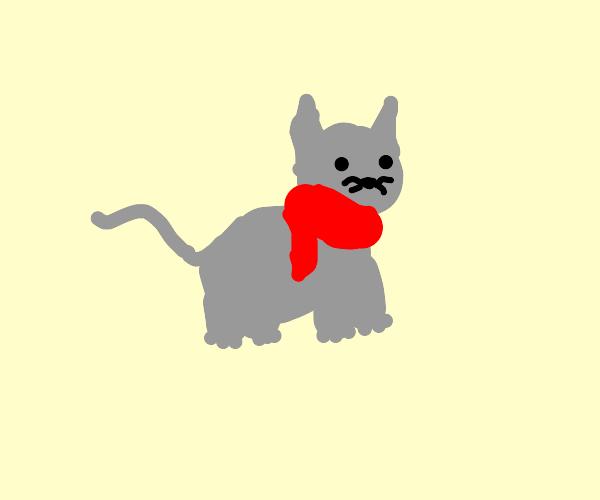 Grey cat wearing a scarf