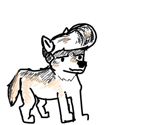 pompadour wolf