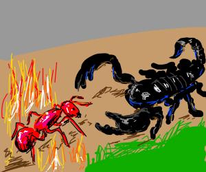 Scorpion vs Fire Ant