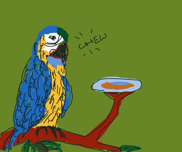 parrot eating burger