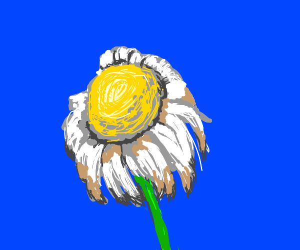 Sad, Wilting Flower