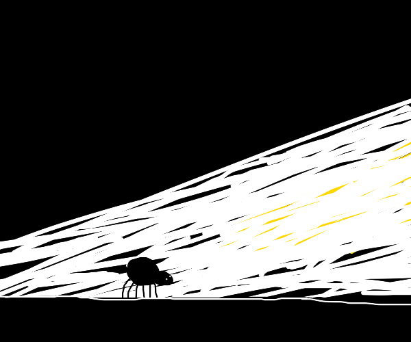Spider walks towards the light