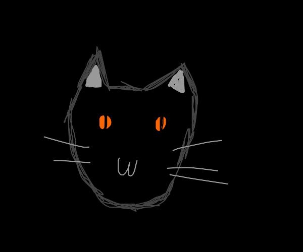 Orange-eyed kitty in the dark
