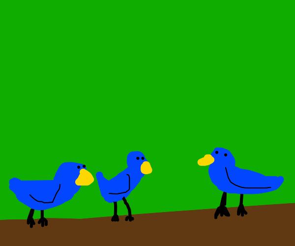 3 blue birds in a tree