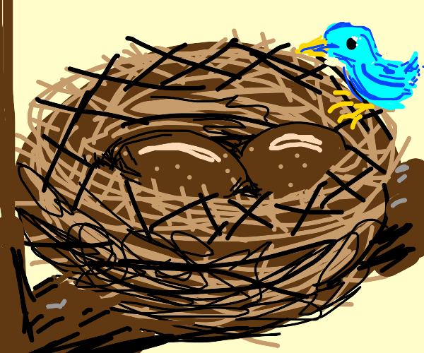 A brown bowl-like nest with brown substance