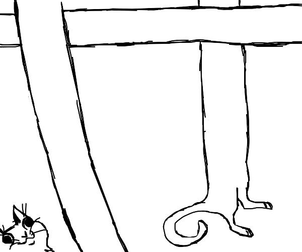 A very loooong cat