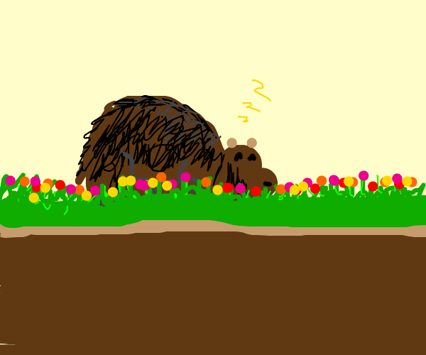 bear lying in grass with flowers
