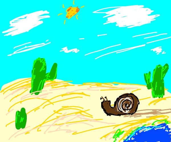 snail going trough the dessert