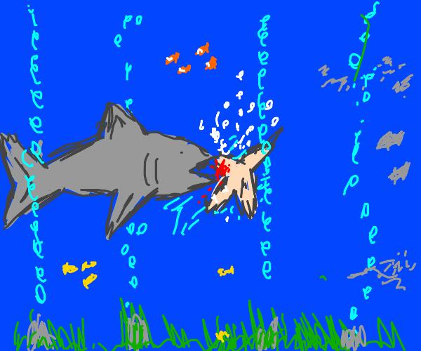 bird eaten by a shark