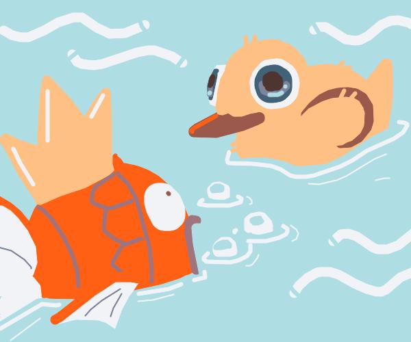 Magicarp saying hey to a duck.