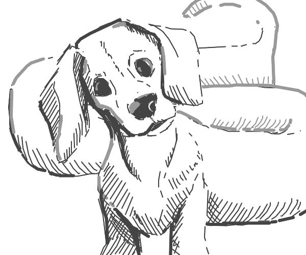 a weiner dog