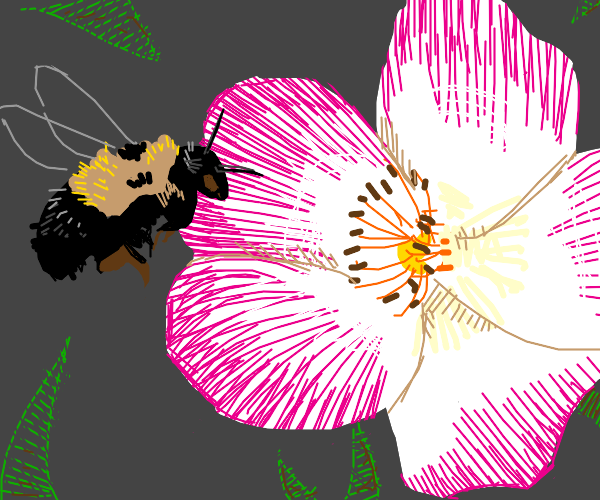 a bee about to land on a pink flower