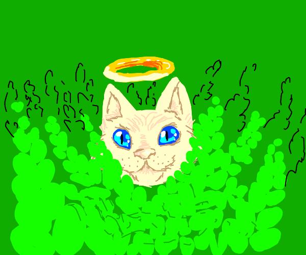 Angel cat hiding in ferns