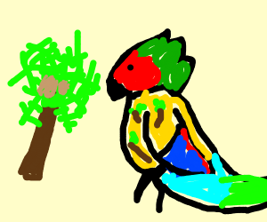 Parrotfish Vacationing