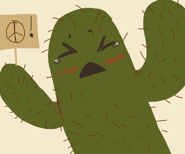 Cactus chan wants peace
