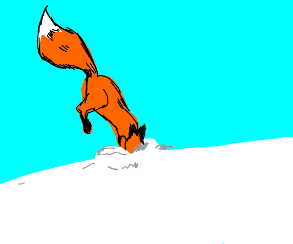 Fox jumps into snow snoot-first