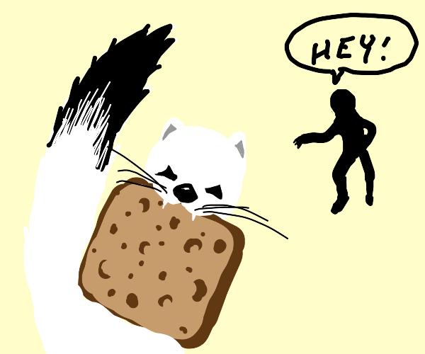 Ermine steals bread