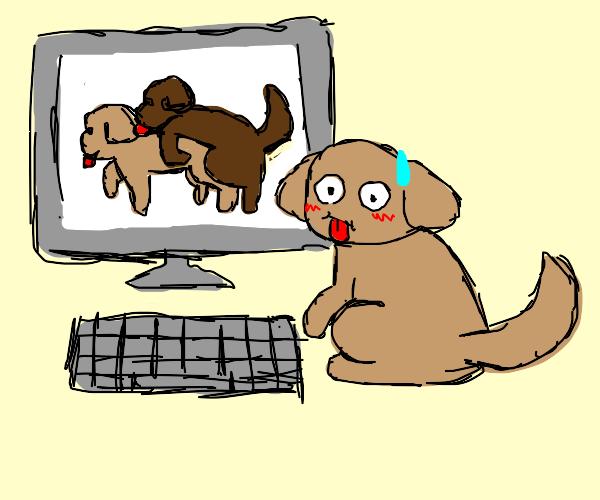 Dog watching nsfw