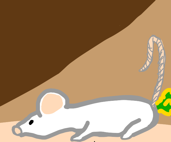 mouse poot