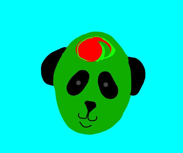 Olive panda