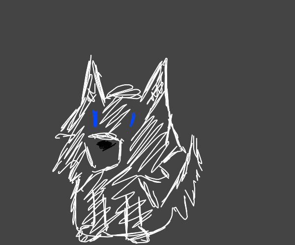 Blue-eyed white wolf
