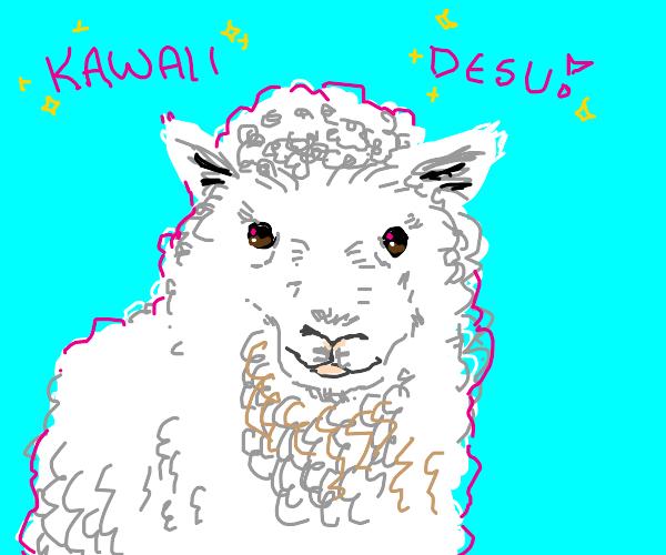 """Sheep says """"Kawaii Desu!"""""""