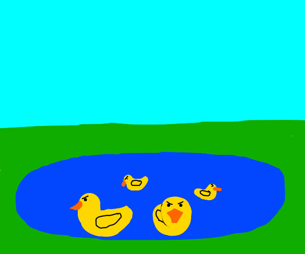 A pond of angry ducks.