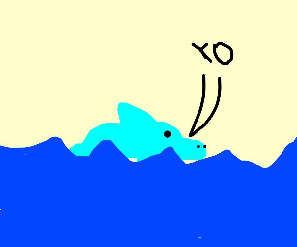"""Dolphin says hi (""""yo"""")"""