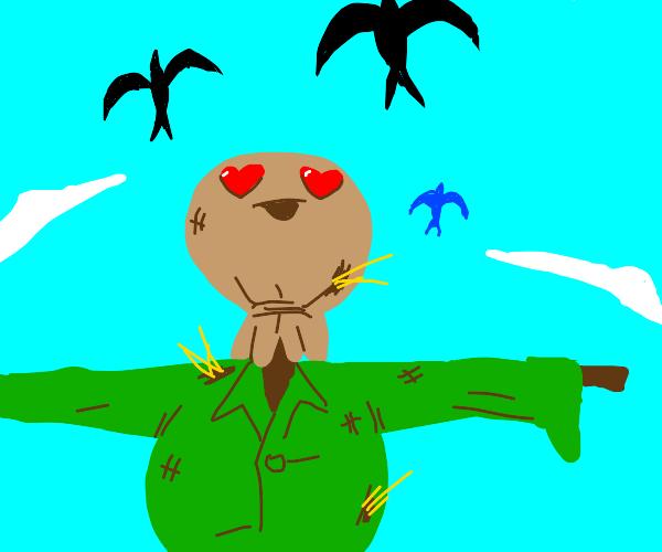 Scarecrow loves birds
