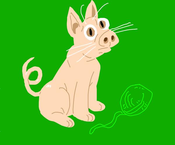 Cat-pig?