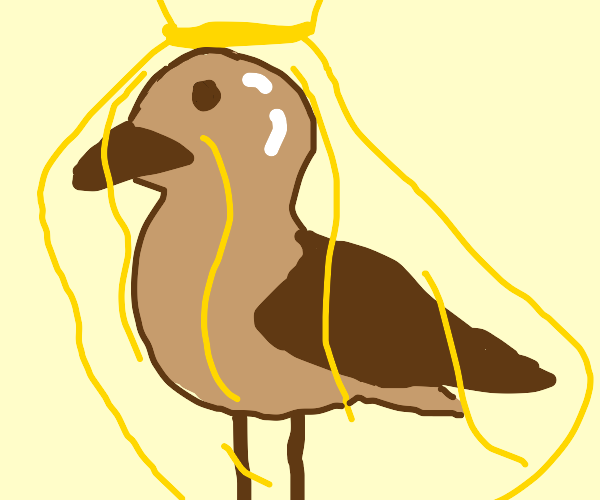 Chocolate sea gull