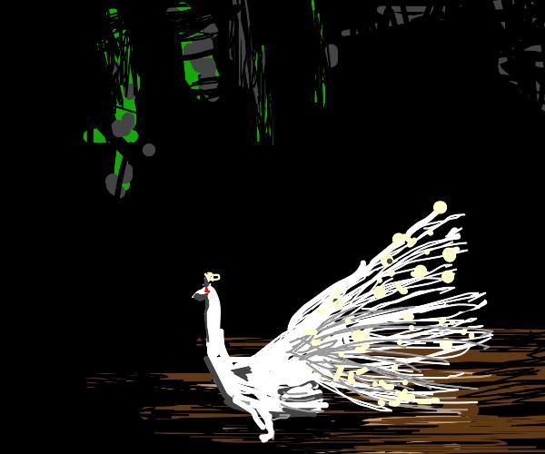 Lovely albino peacock