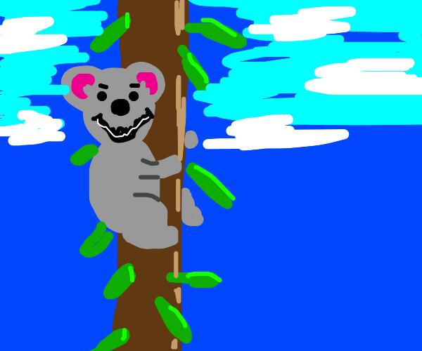 koala with a creepy smile